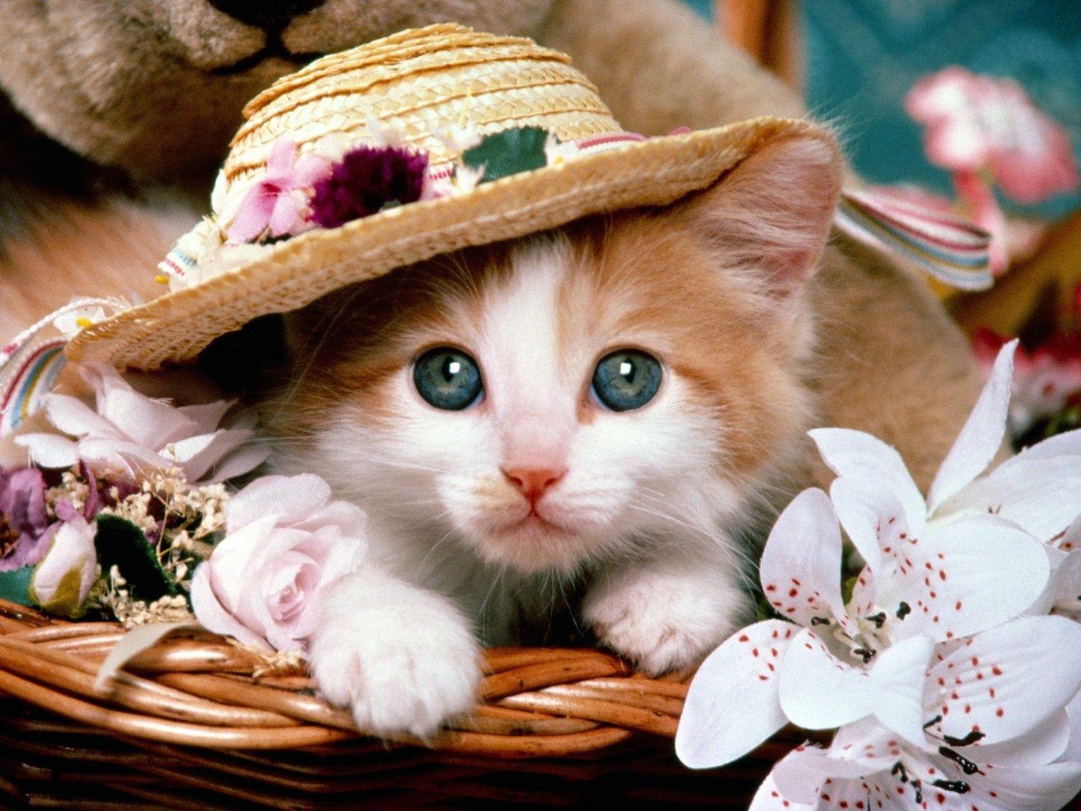 Wallpaper download cat - Baby Cat Wallpaper
