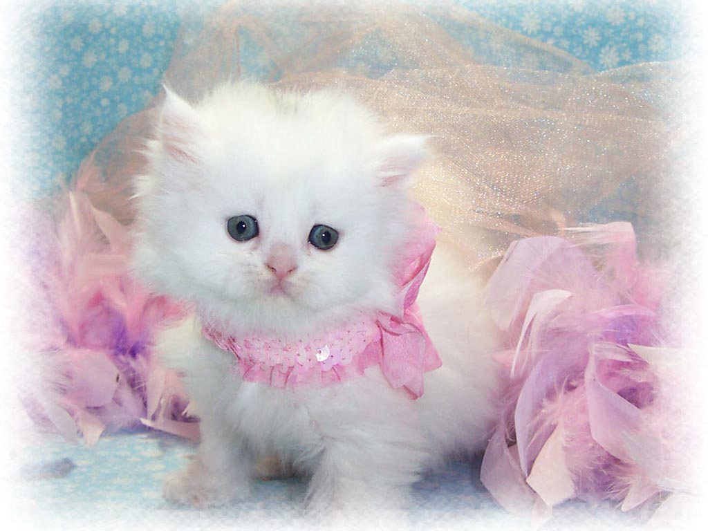 Best Baby Cat s and Baby Cat Widescreen Wallpapers