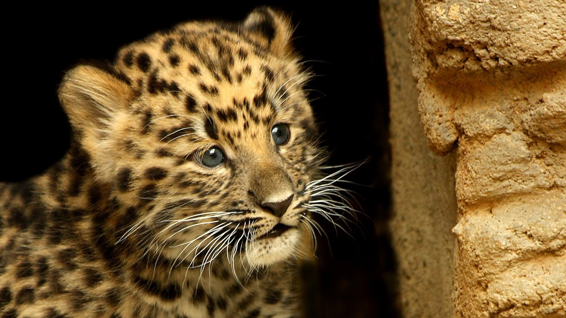 Group of baby cheetah wallpapers android cute cheetah wallpaper collection 70 voltagebd Image collections