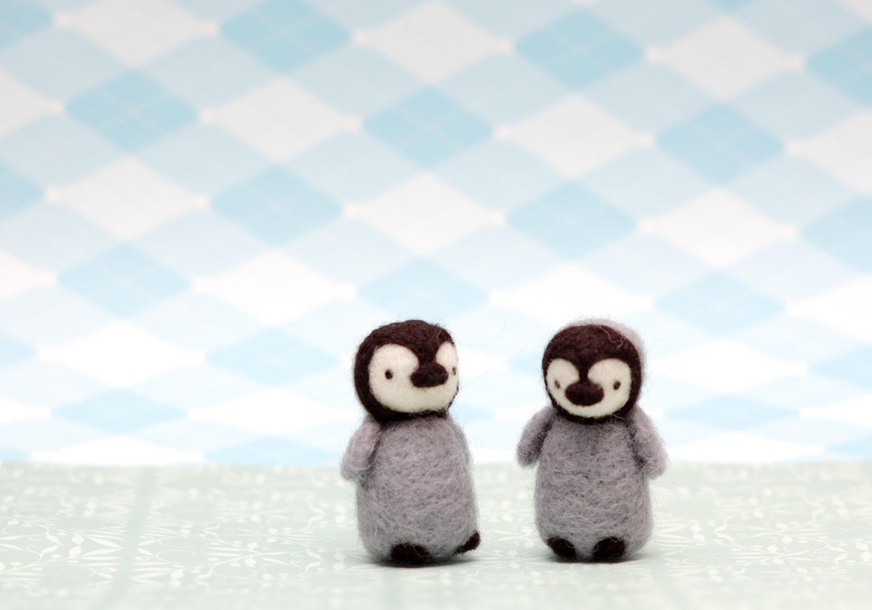stunning baby penguin photos