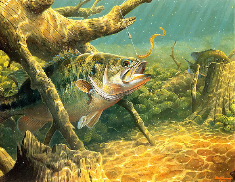 картинки на тематику рыбалка