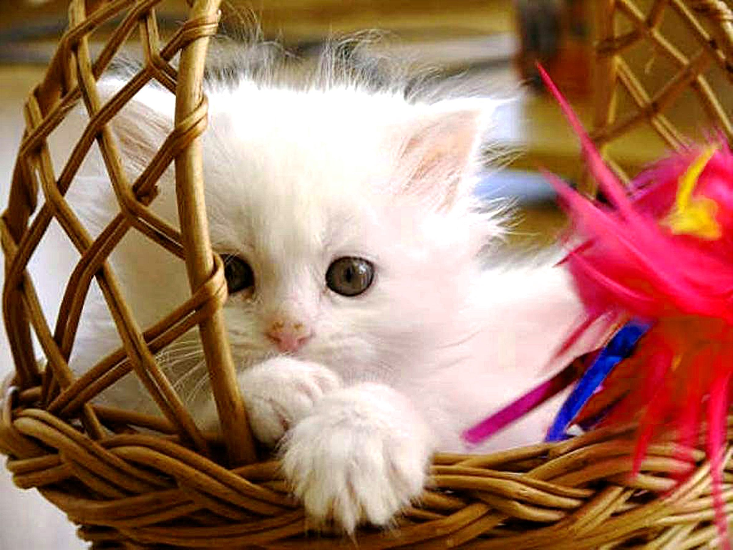 Beautiful Cat Image Gallery