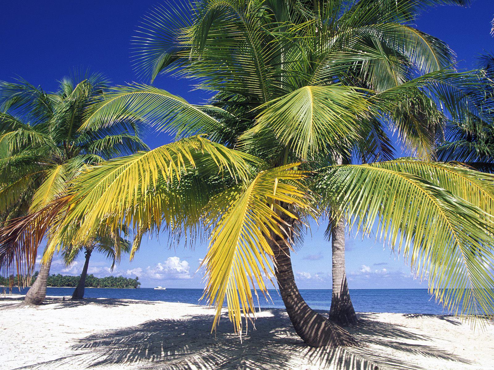 30 Image For Mobile Belize