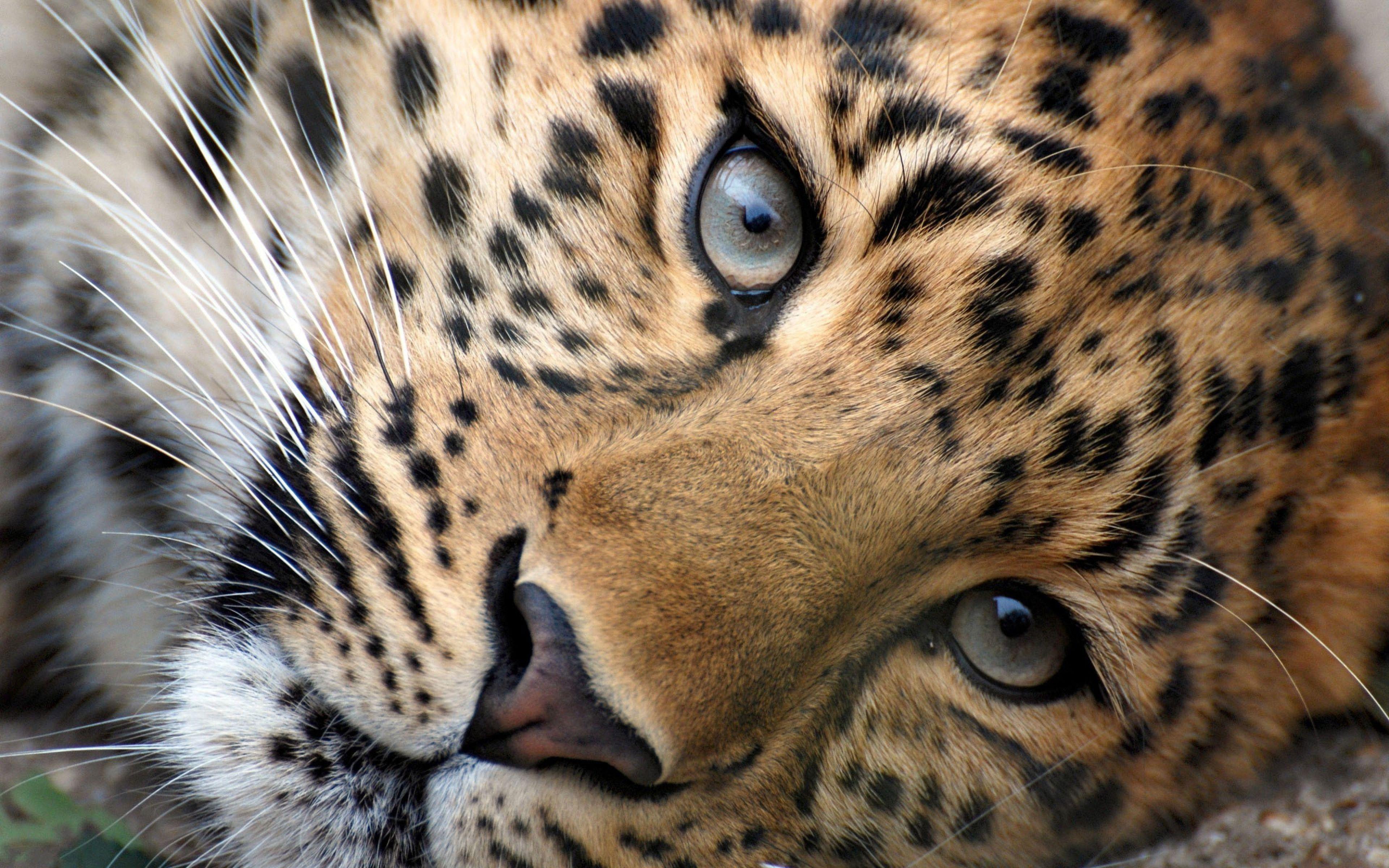 Картинки про животных красивые 2