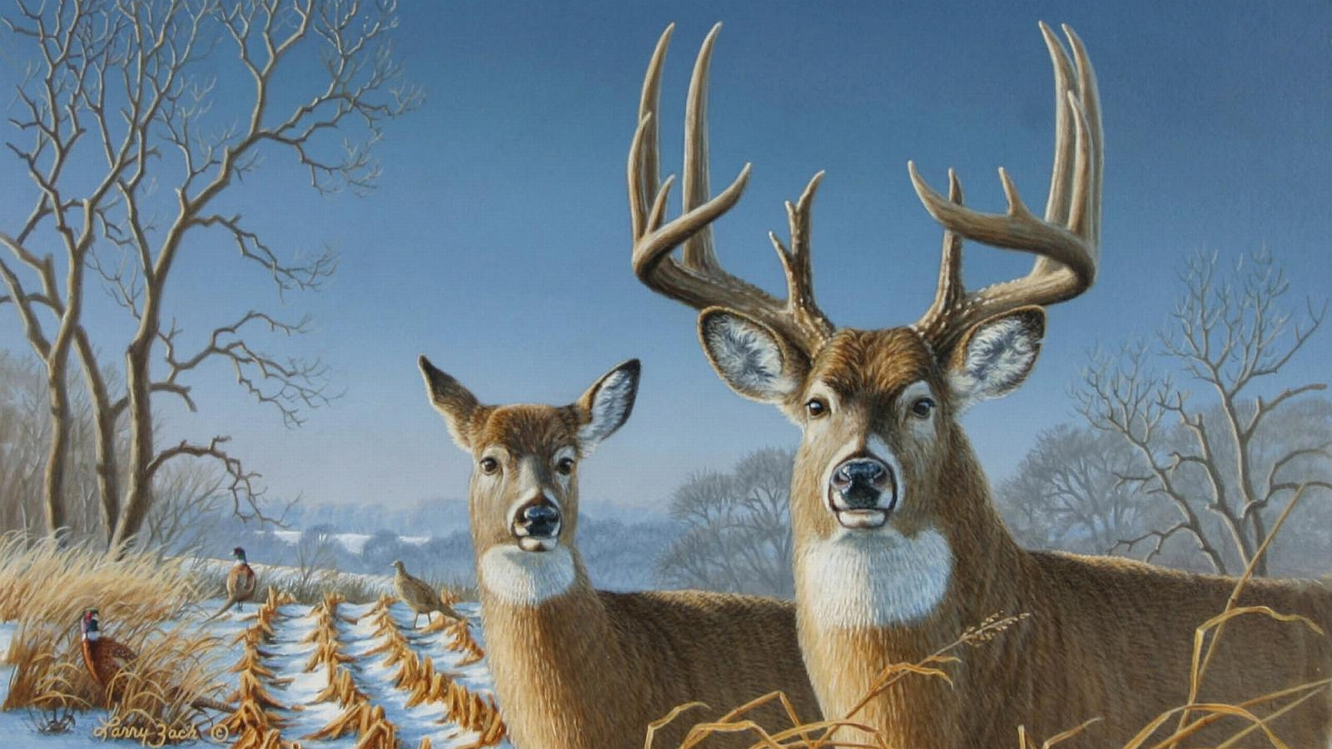 Blue Mule Deer Wallpaper