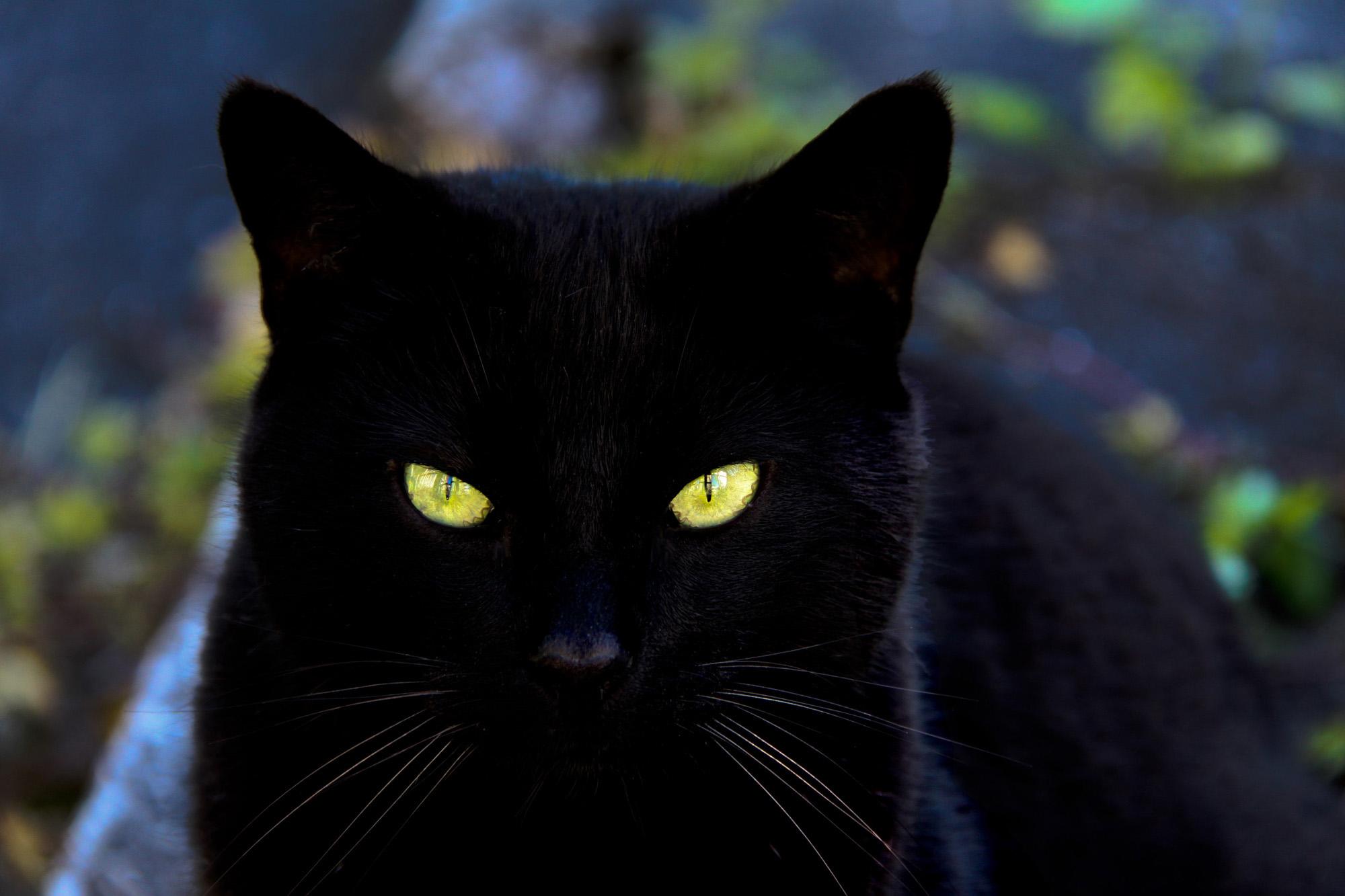 black cat computer wallpapers, black cat photos