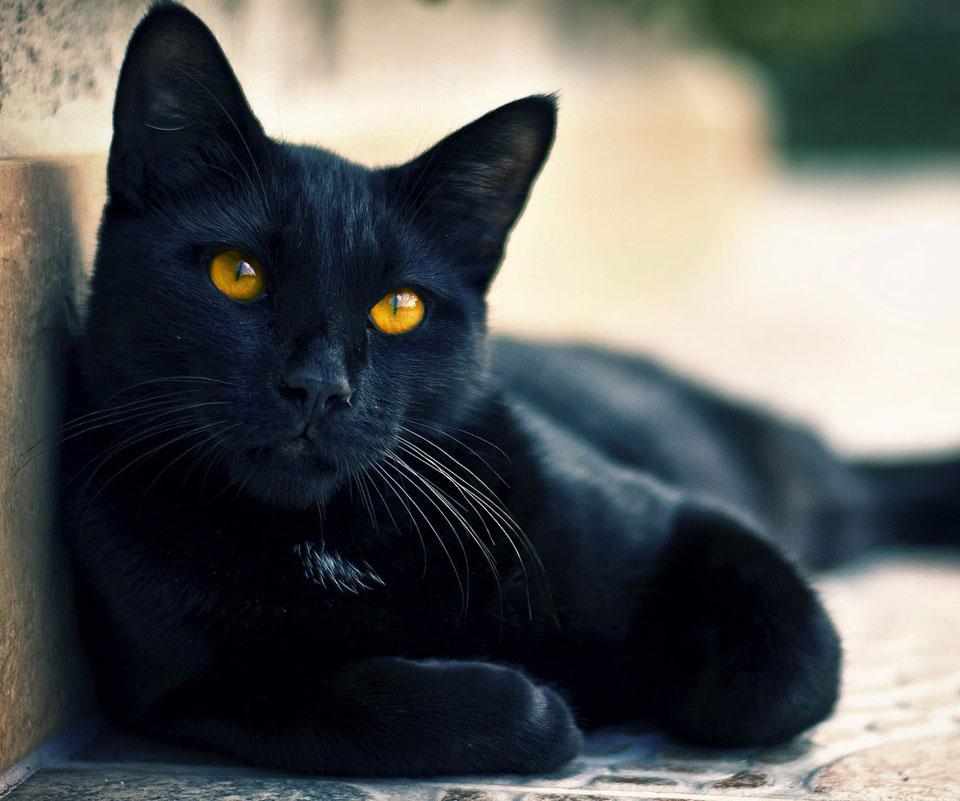 <b>Cute Black Cat</b> Clipart | Free Clipart Design <b>Download</b>