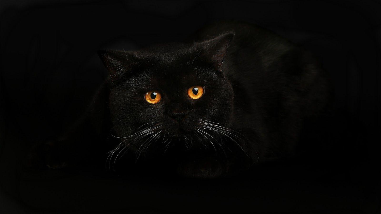 черное фото на заставку