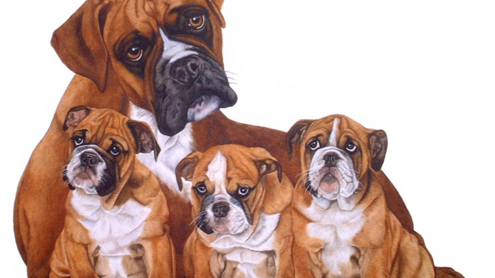 boxer-dog-wallpapers