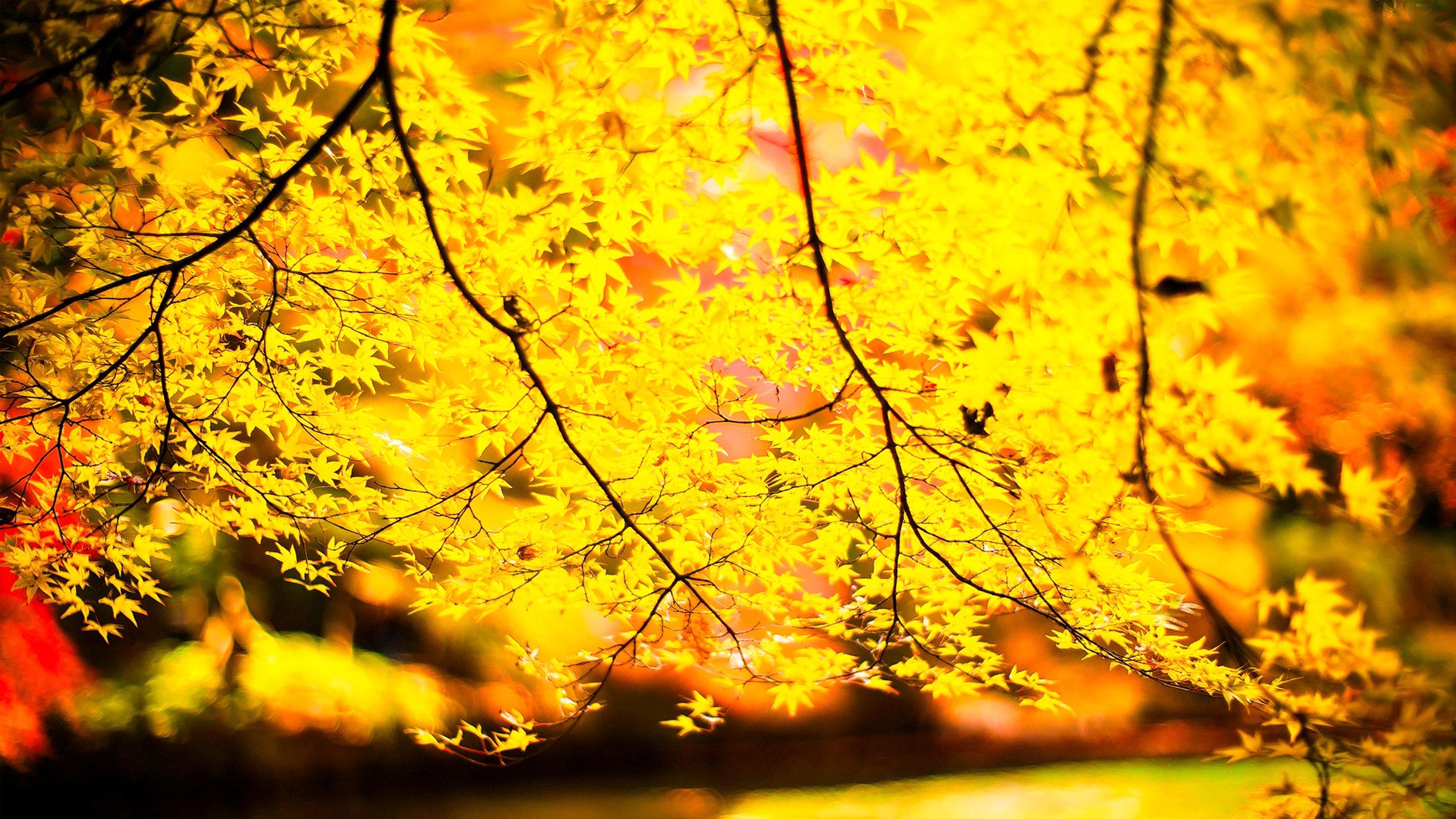 BNeon Yellow B Backgrounds