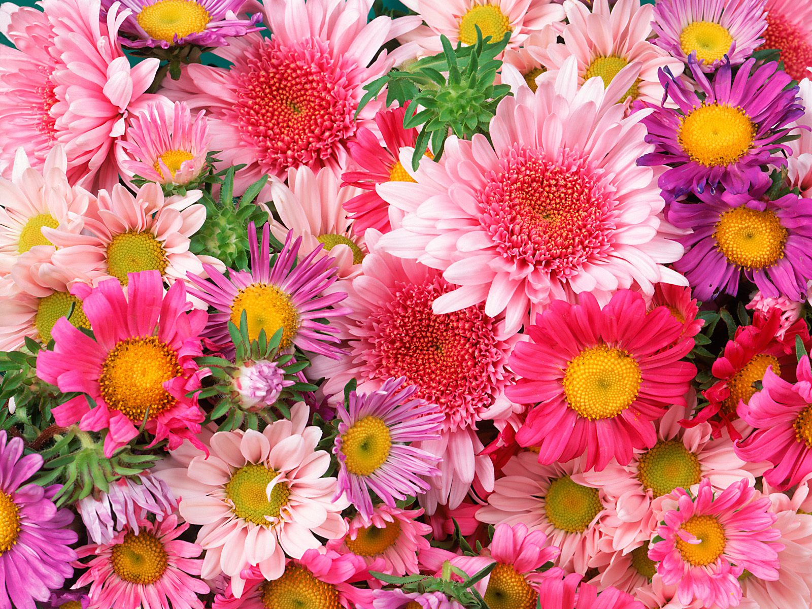 free newest colorful flower images on your desktop, Beautiful flower