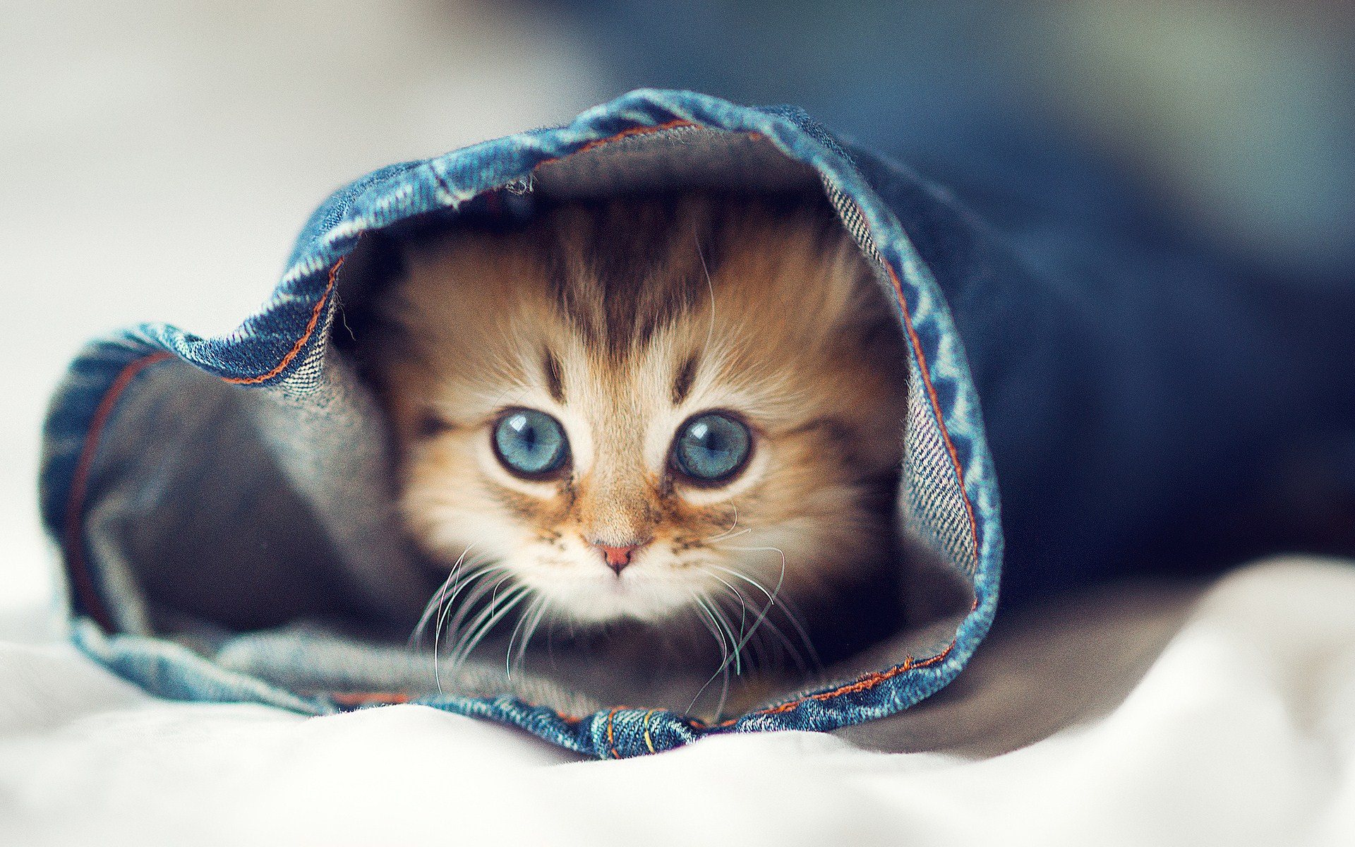 cute-wallpapers-of-kittens