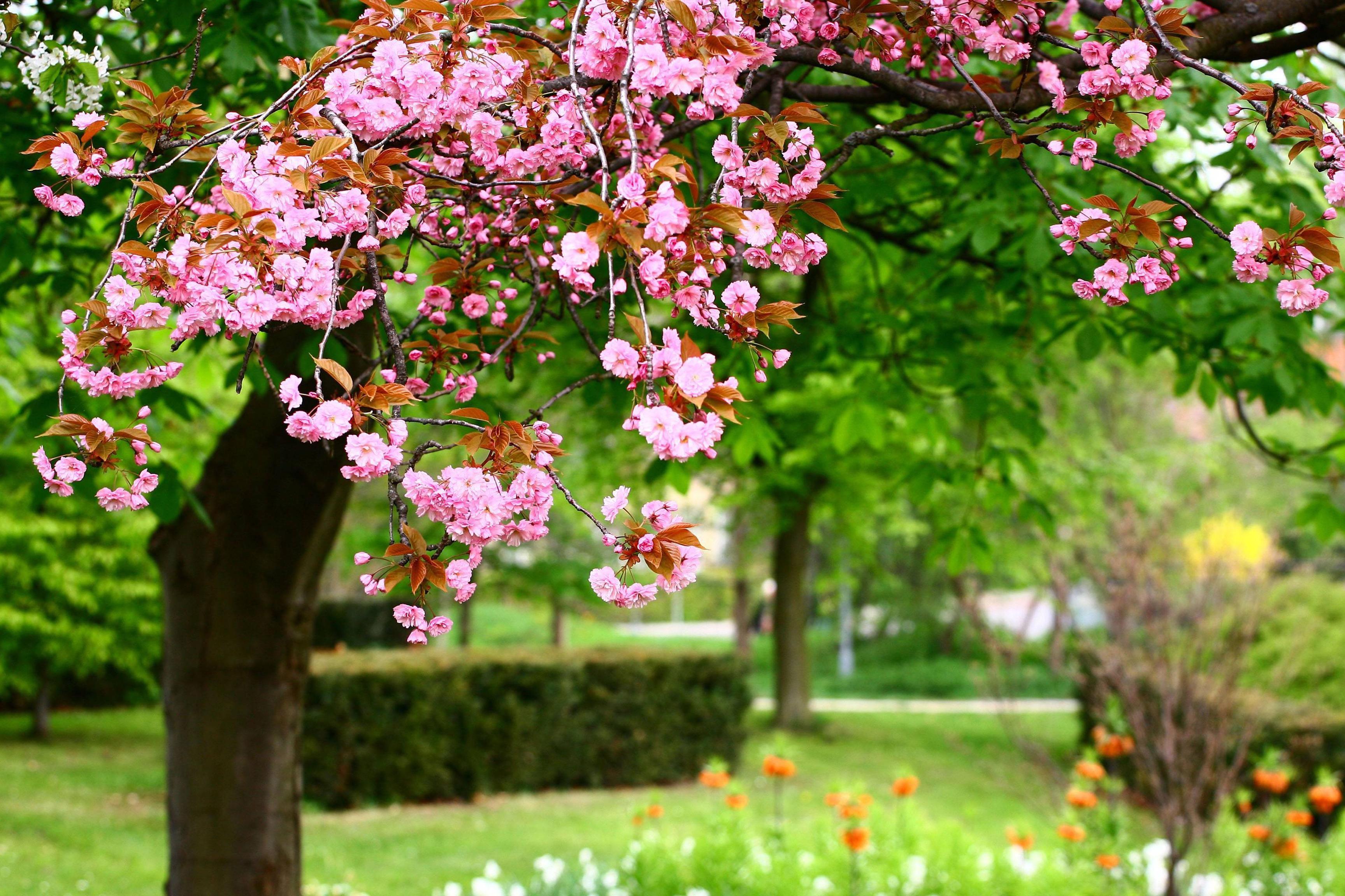 Flower garden wallpaper background - Backgrounds For Mobile Flower Garden 3456x2304 0 957 Mb