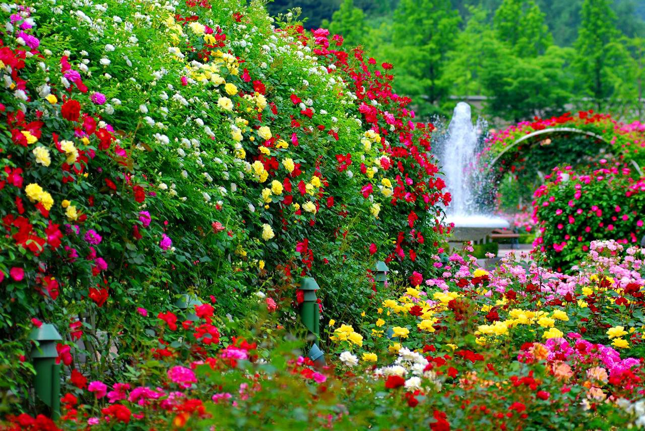 HD Creative Flower Garden Pictures. 1280x856 0.308 MB