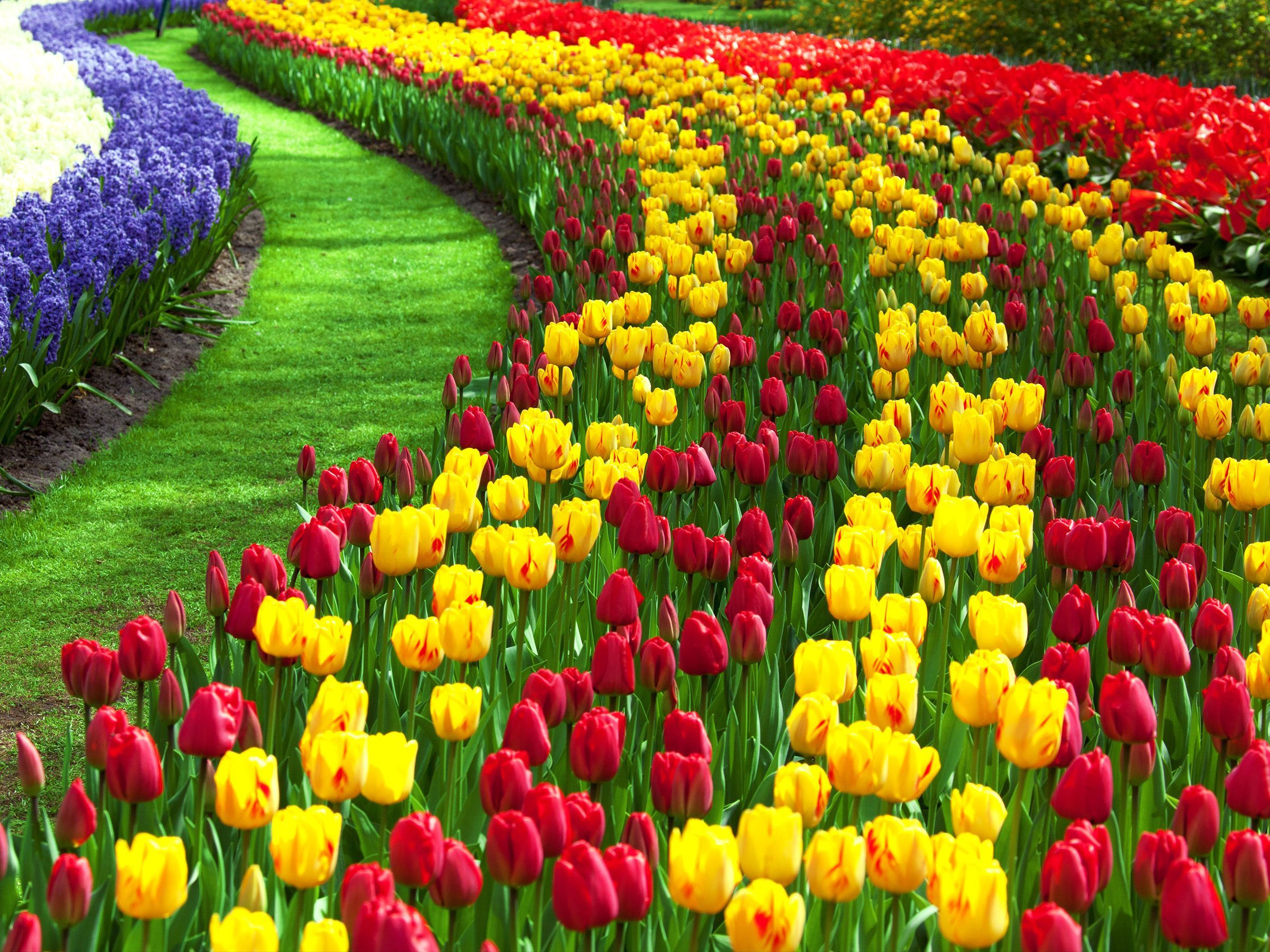 flower garden id 514071932 wallpaper for free cool hqfx backgrounds 2400x1800 082 mb