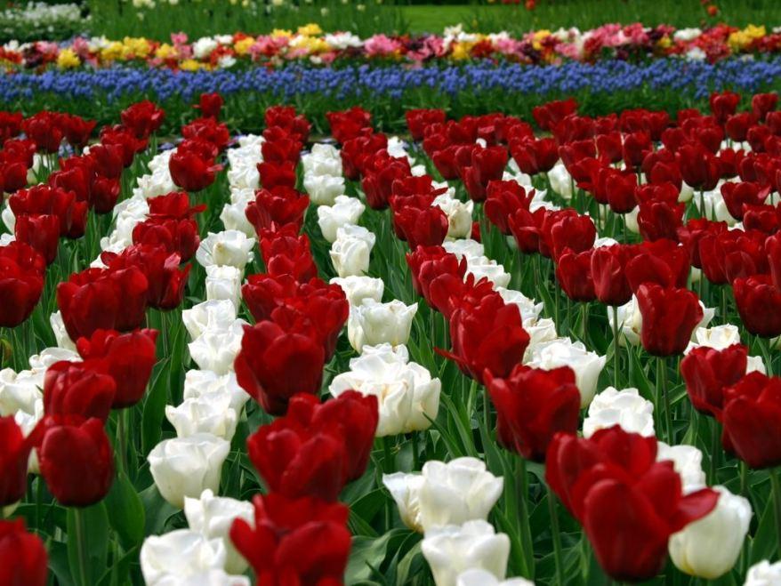 Flower Garden Wallpaper newest flower garden images & wallpapers luchjo bucklan