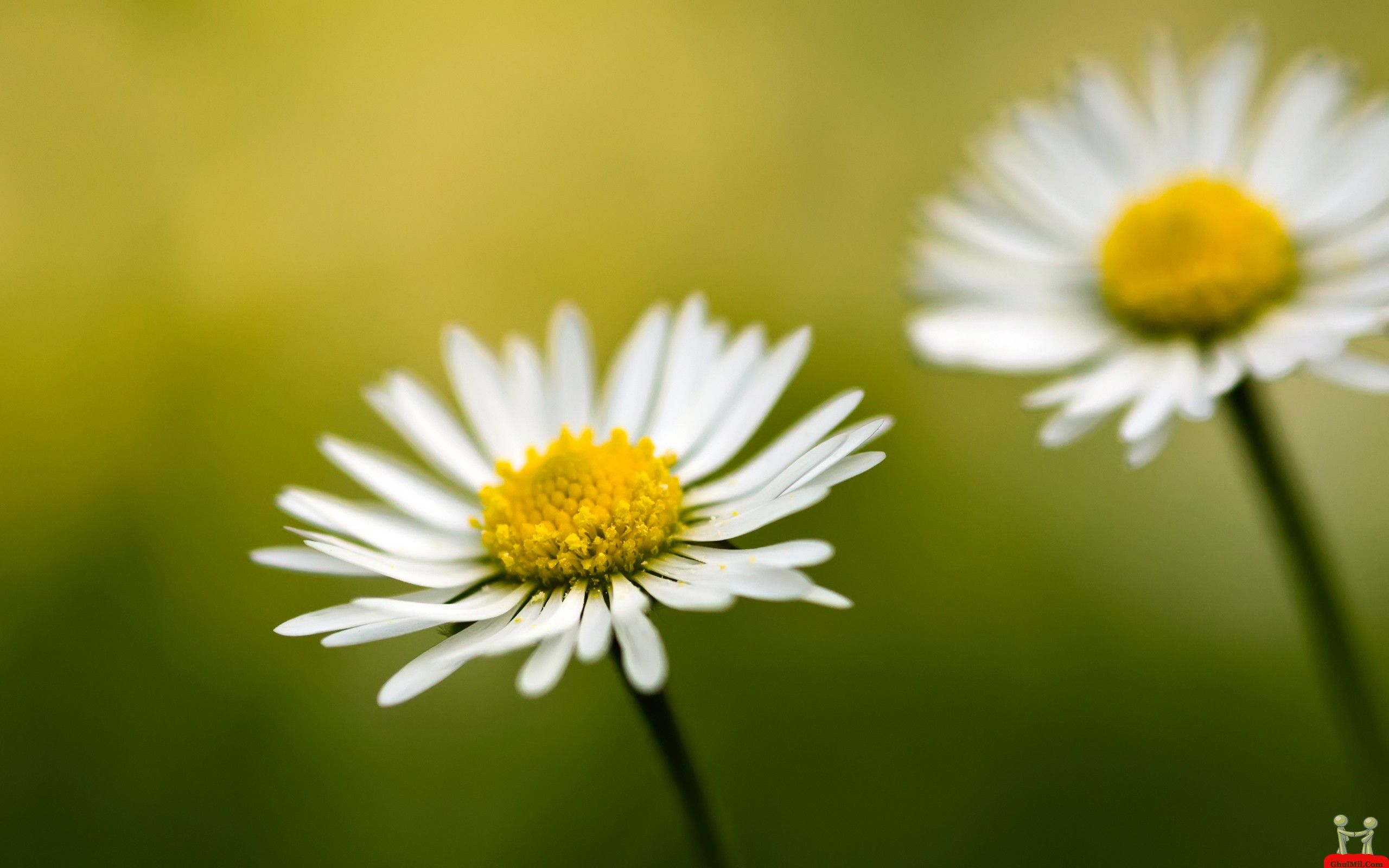 flowers-high-definition-wallpapers