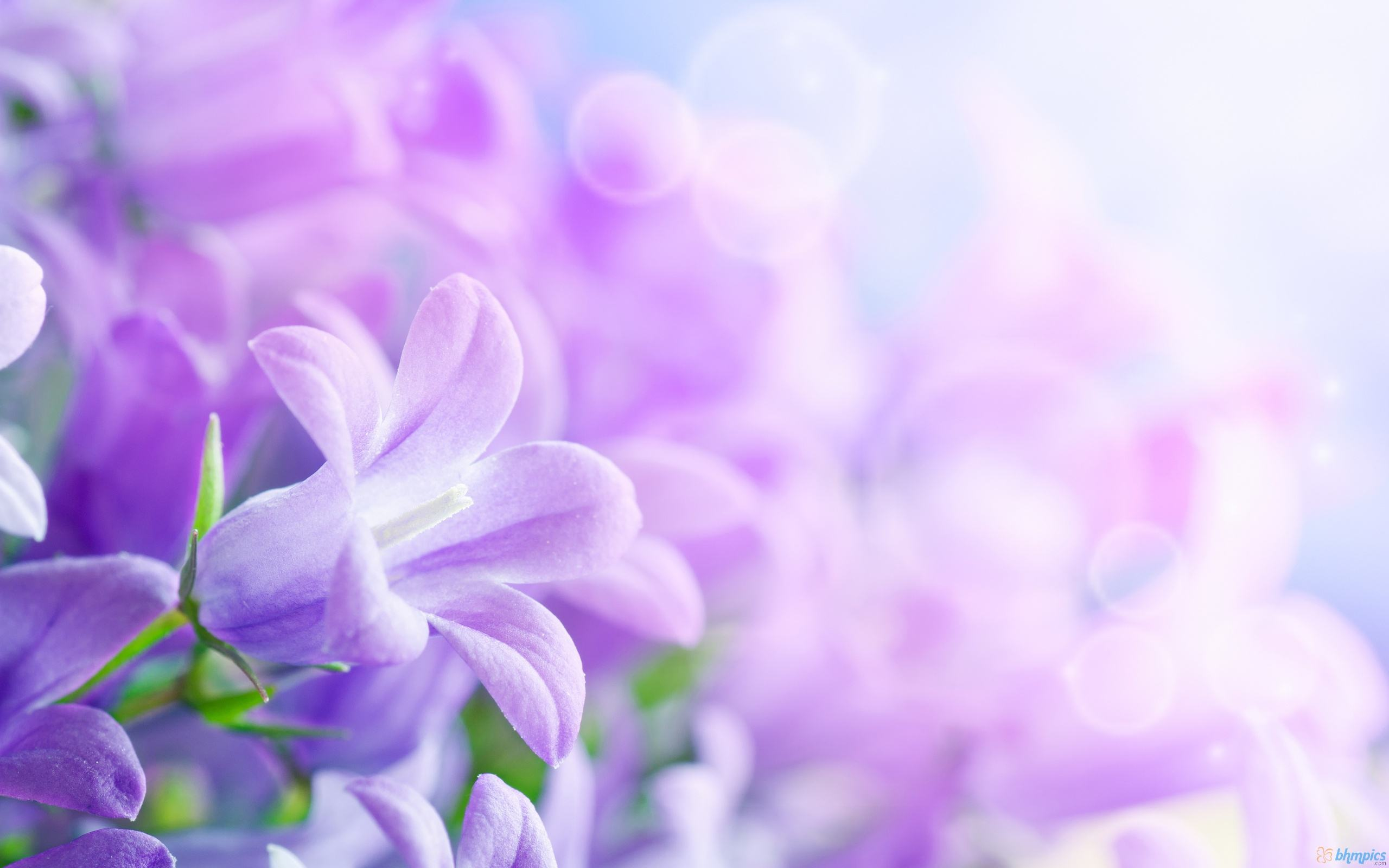 flowery-backgrounds