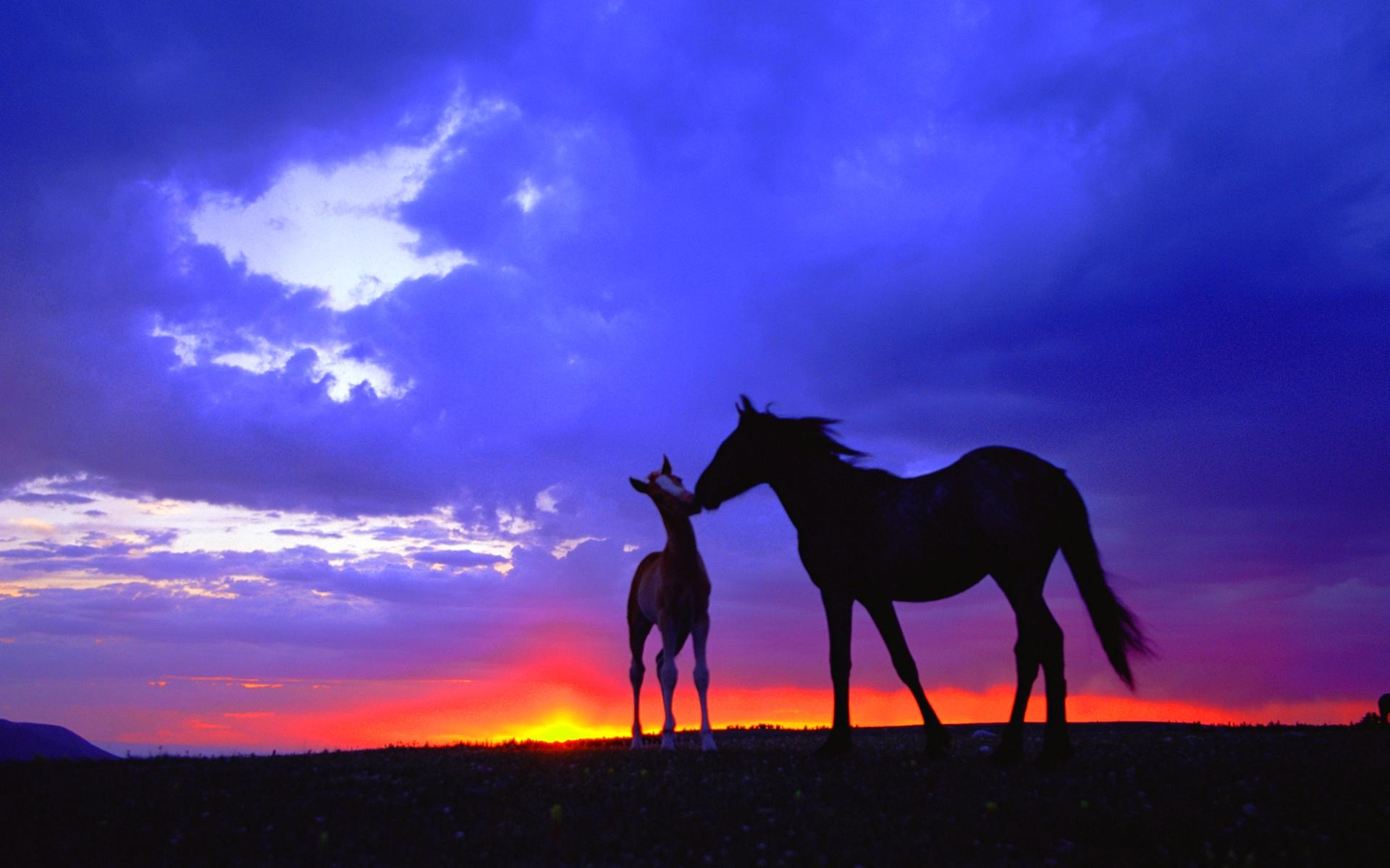 Horse Wallpapers ~ EquestrianMag