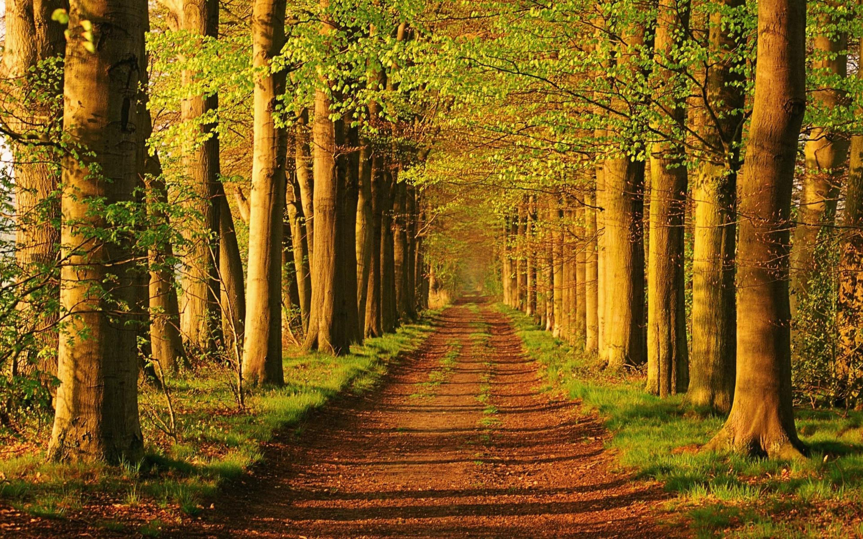 Download Wallpaper High Resolution Forest - forest_landscape_wallpaper_008  Snapshot_28143.jpg