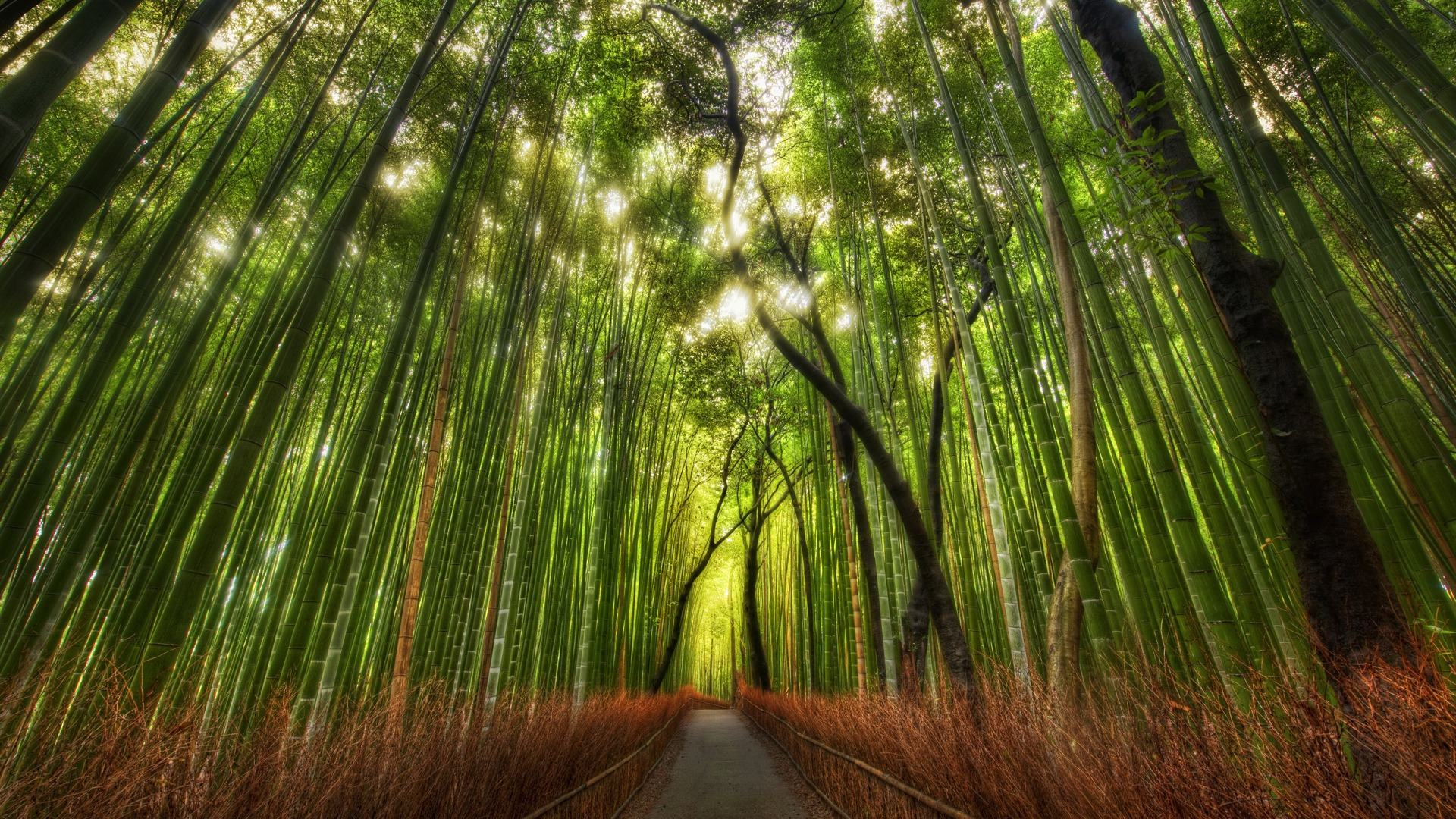 Good Wallpaper High Resolution Forest - forest_scenery_wallpaper_004  Graphic_19603.jpg