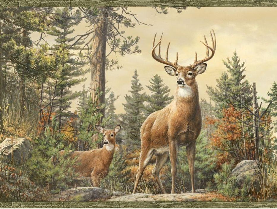 Beautiful Deer Wallpapers Beautiful Deer HDQ Pictures