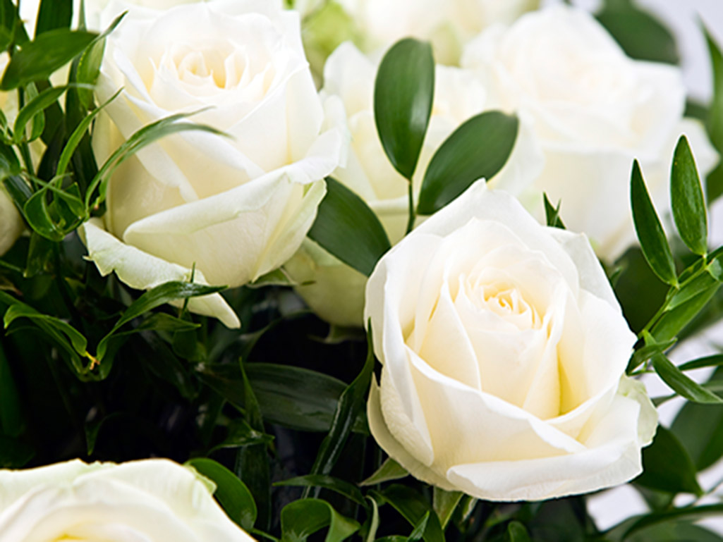 Funeral Background Gallery 570123226 – Funeral Program Background