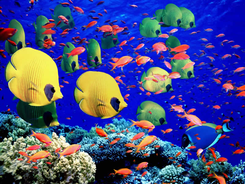 coral reef and great barrier reef The ecosystem has collapsed for 29 percent of the 3,863 reefs in the giant coral reef system, according to new research scientists are learning which corals are the winners and losers.