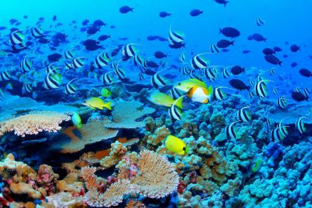 Pictures Of Great Barrier Reef