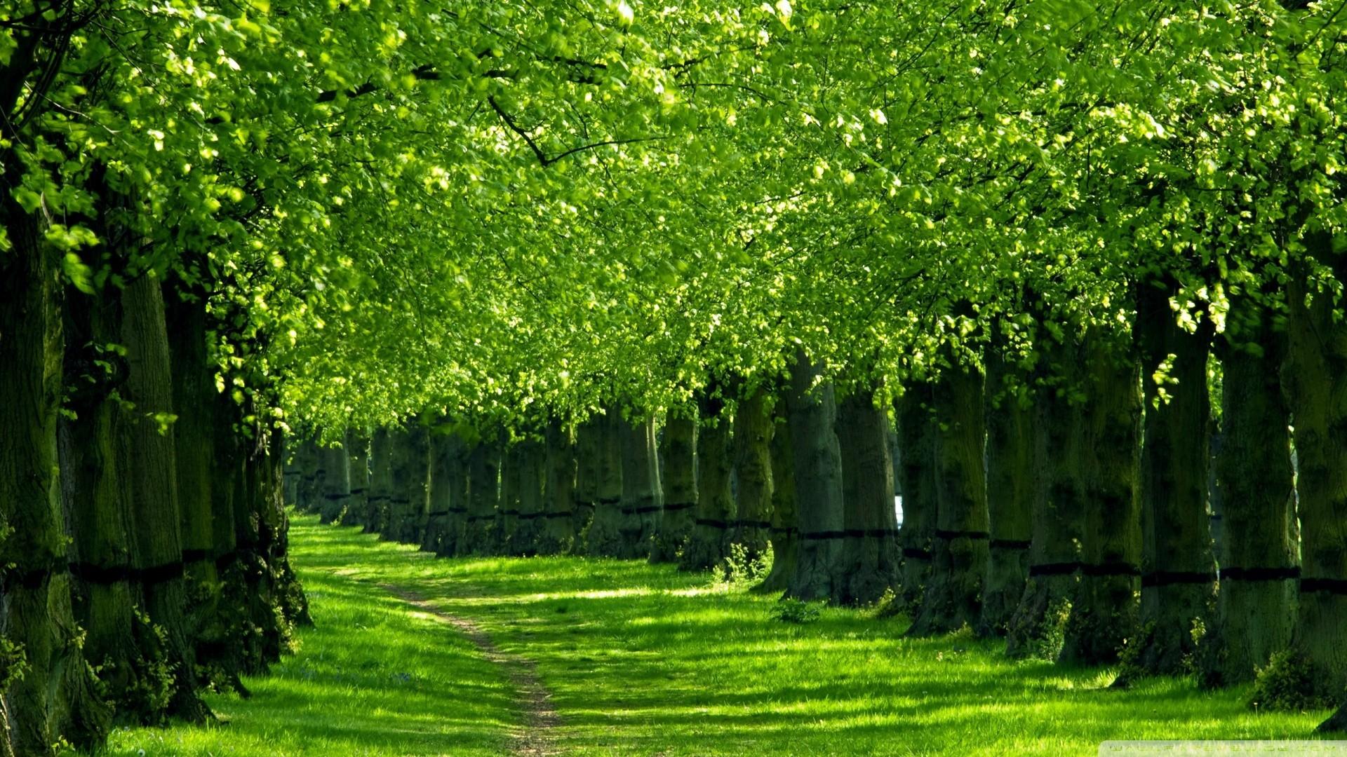 Hd wallpaper nature green - Green Nature Image