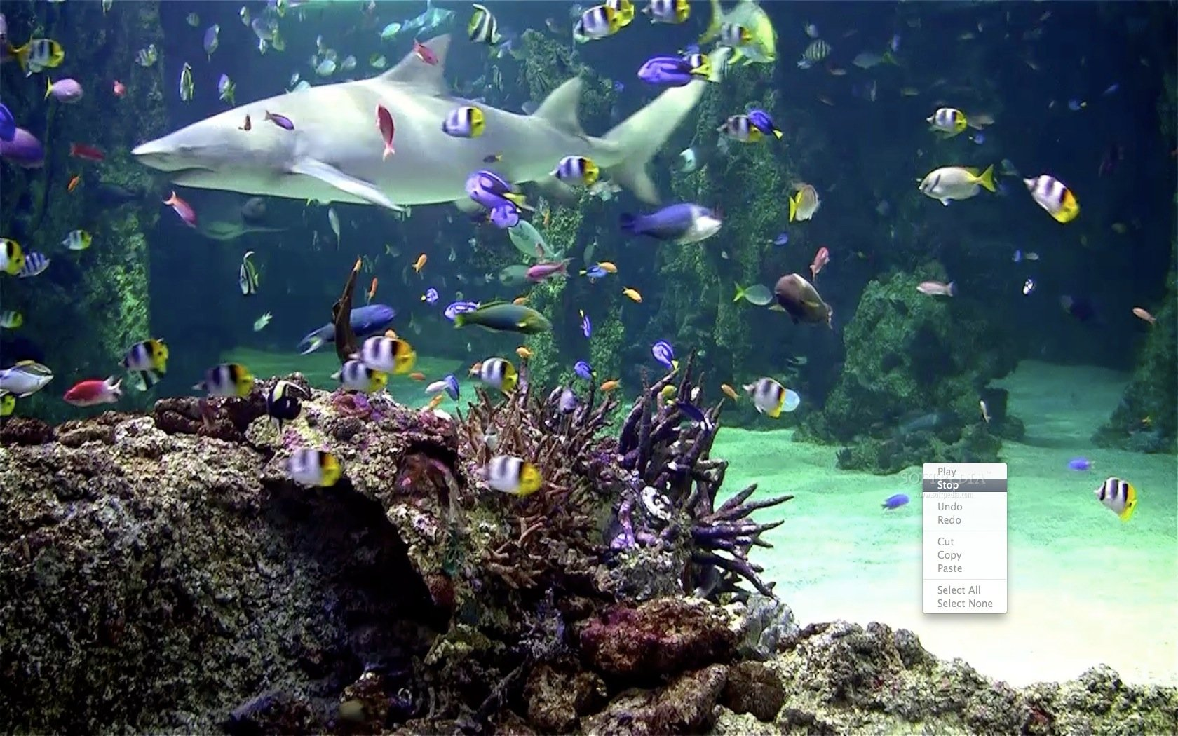 hd-aquarium-wallpapers