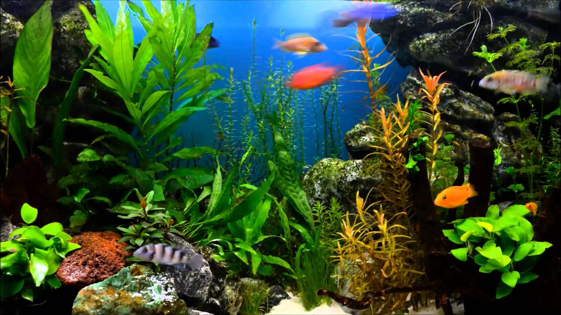 Stunning aquarium picture pictures of aquarium voltagebd Images