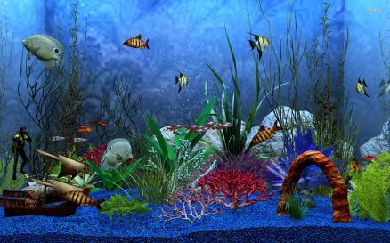 Pictures Of Aquarium
