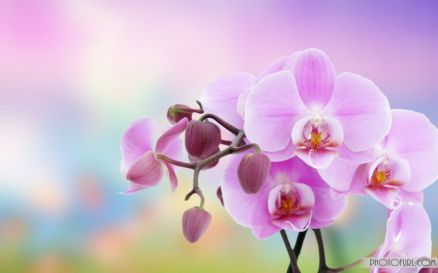 High Quality Flowers Images