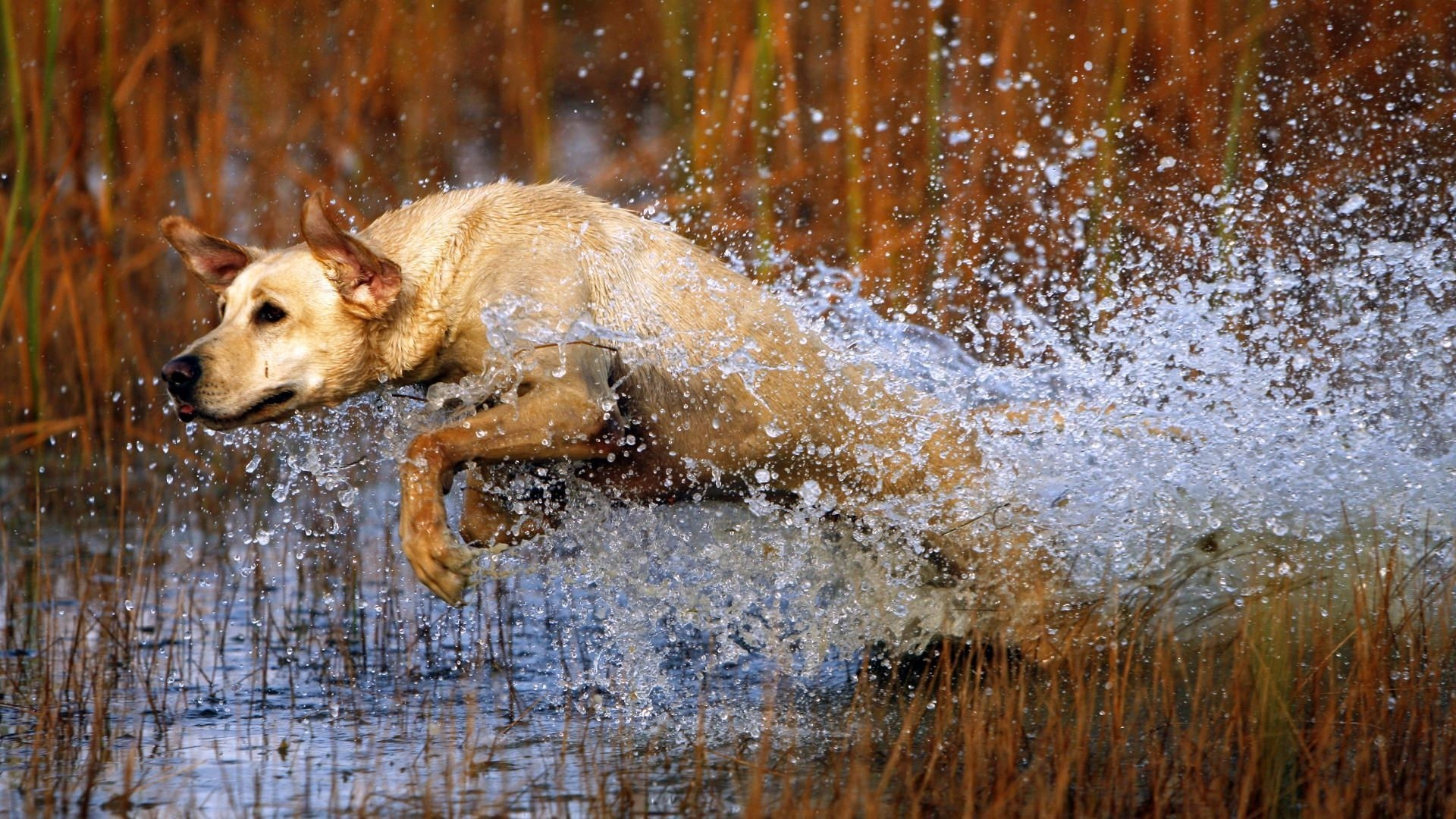 mobile hunting dog pictures - high quality