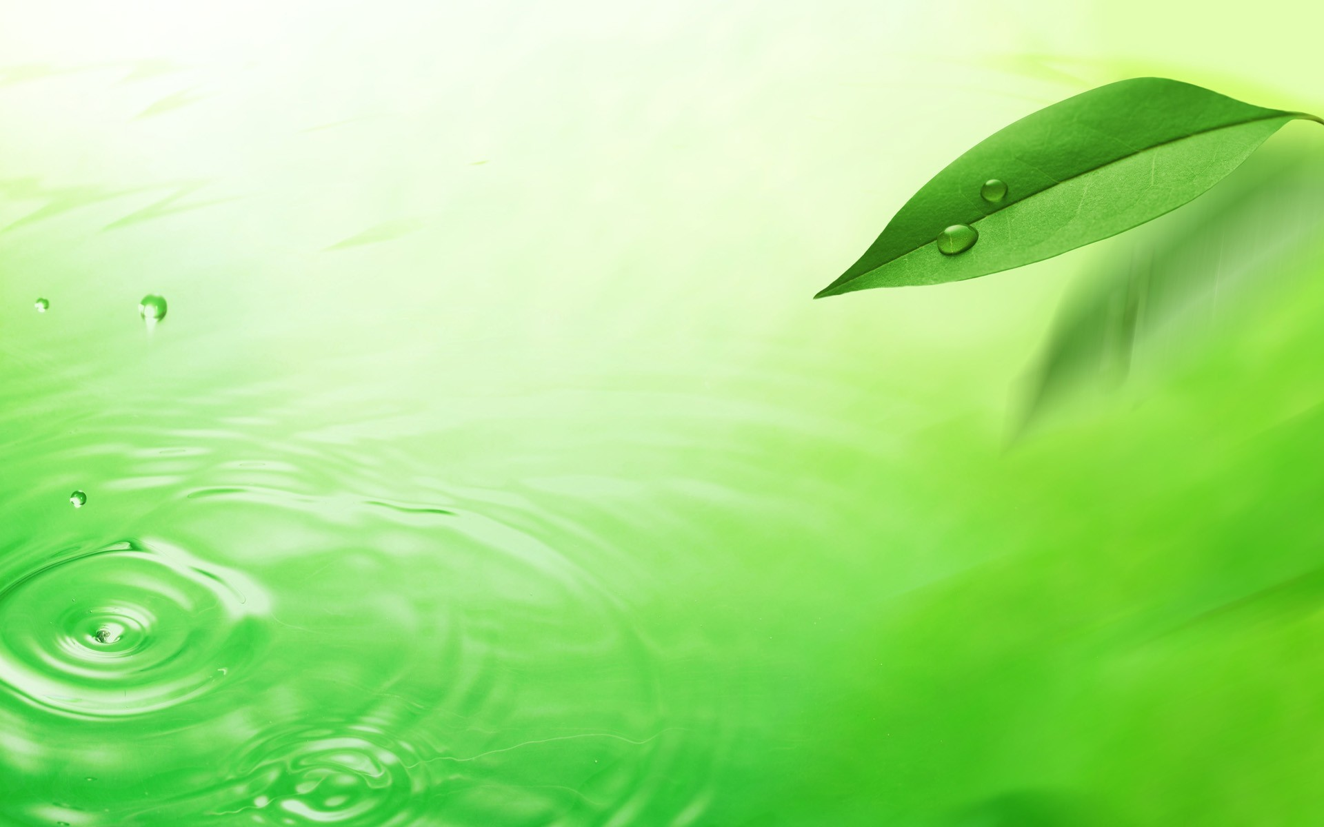 green, texture, photo, background, download, green leaf texture