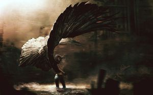 Maximum Ride Wallpaper