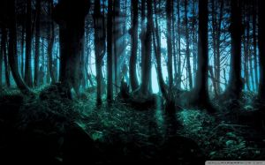 Mysterious Forest Images