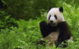 Pictures Of Nature Animal