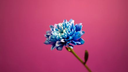 Pink And Blue Wallpapers