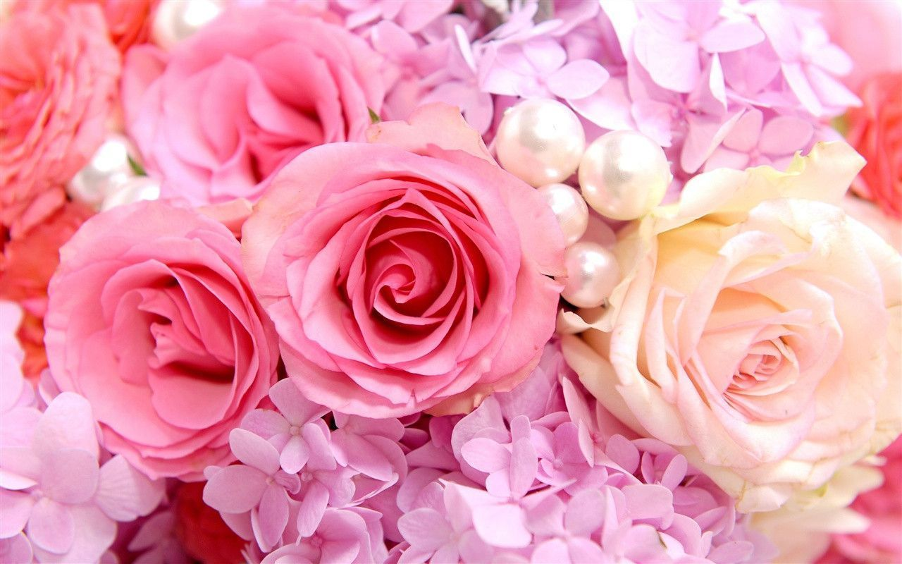 pink-roses-backgrounds