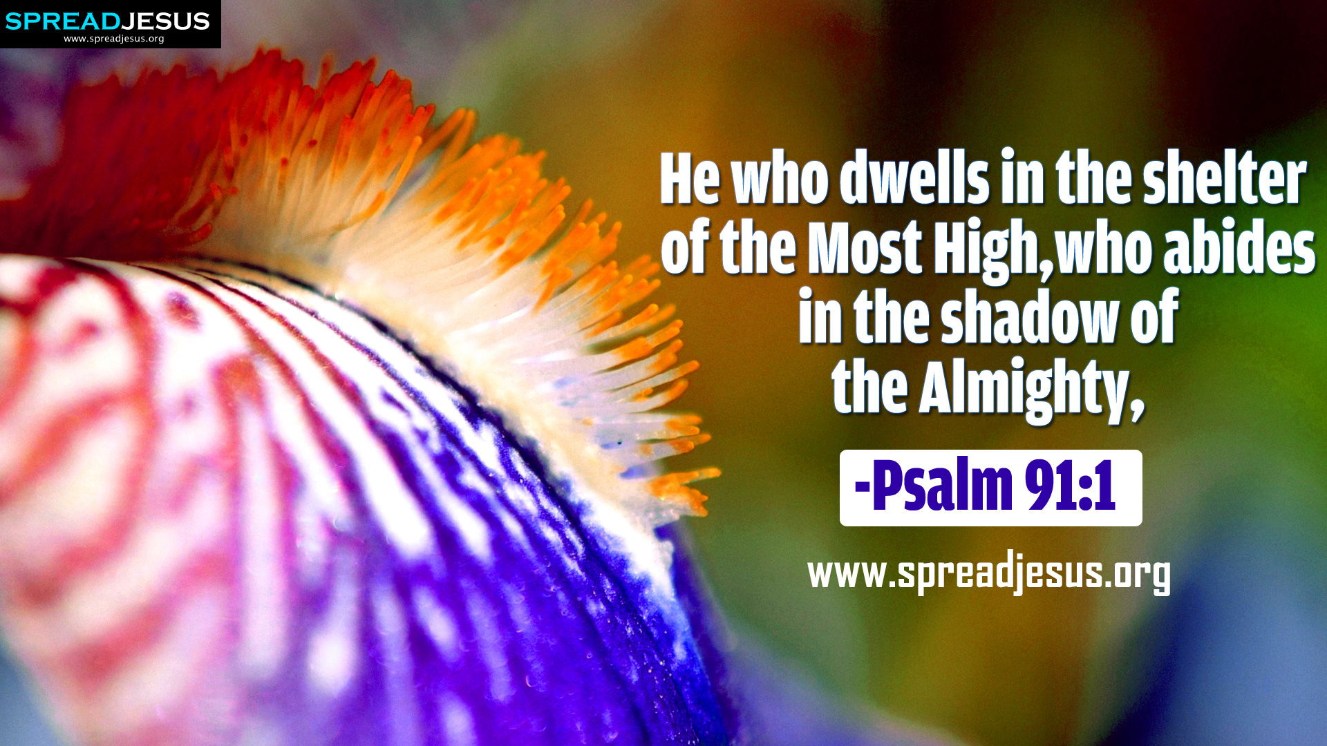 psalm high quality images psalm 91