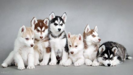 Image Puppies