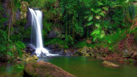 Wallpaper Rainforest Waterfall