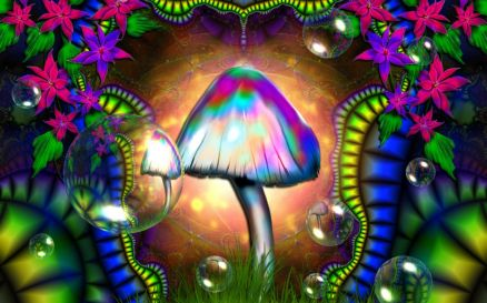 Pictures Of Shroom