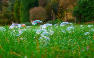 Image Soap Bubble
