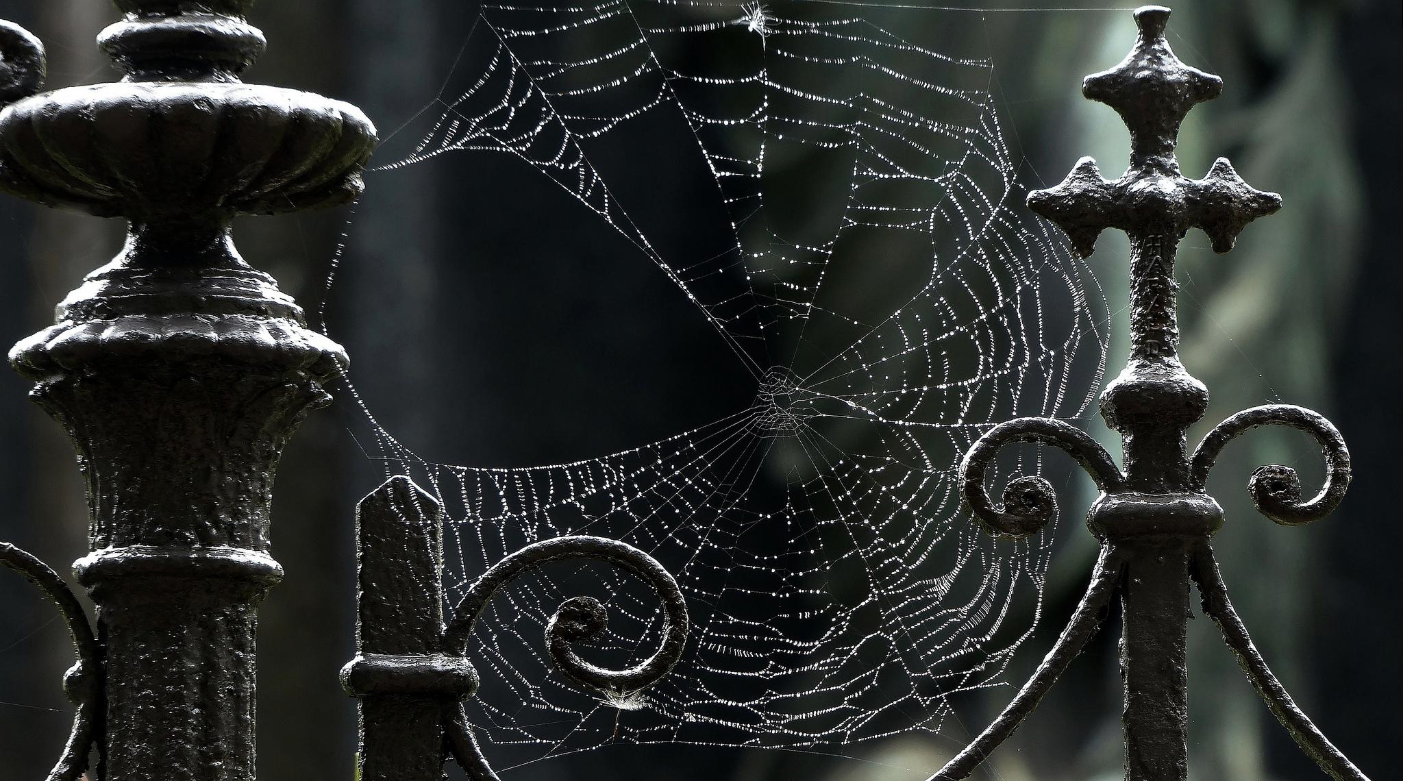 Free Best Spider Web Wallpaper
