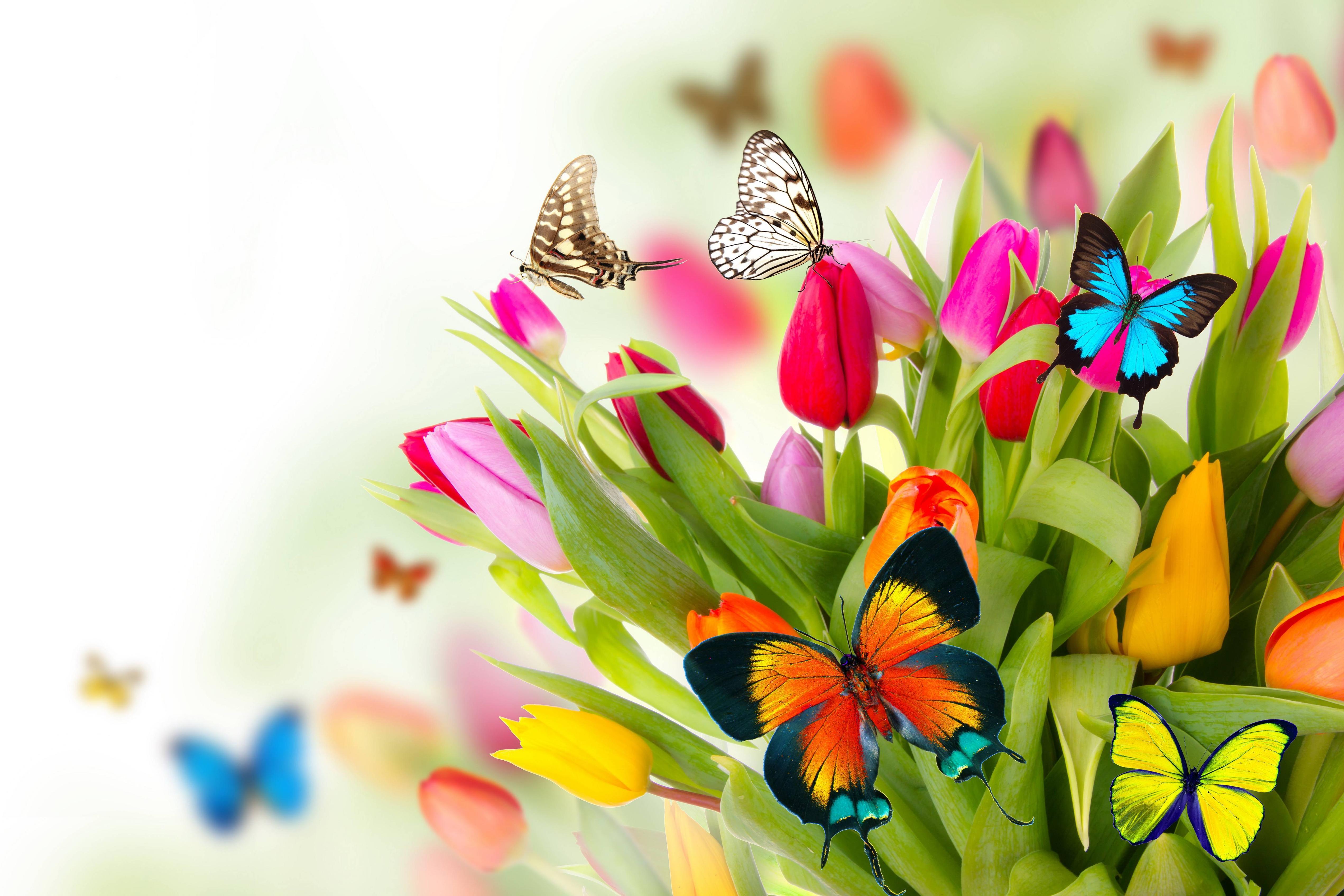 Spring flowers wallpapers desktop flowers healthy spring flowers backgrounds desktop wallpaper cave mightylinksfo