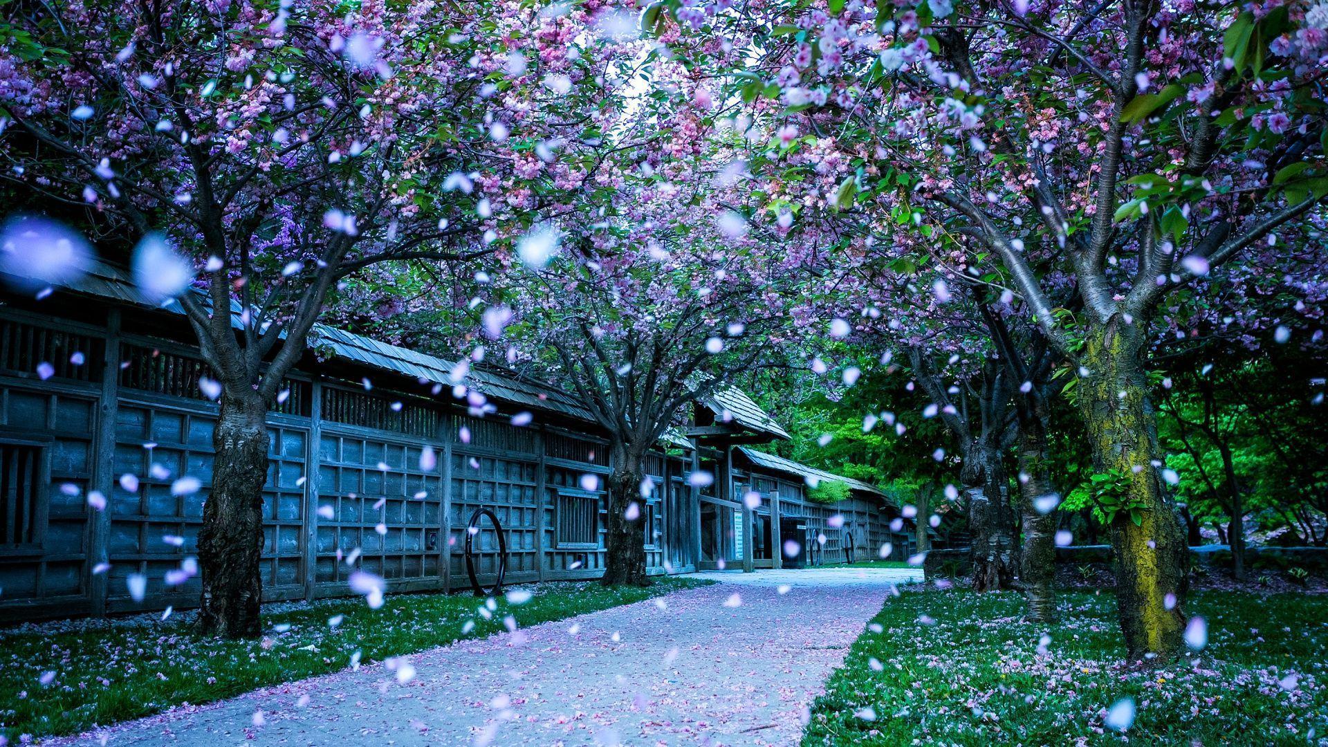 Hd wallpaper spring - Spring Nature Wallpaper