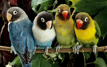 Animals Birds Pic